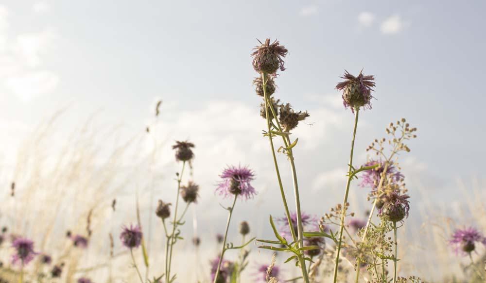 mehr Wildblumen