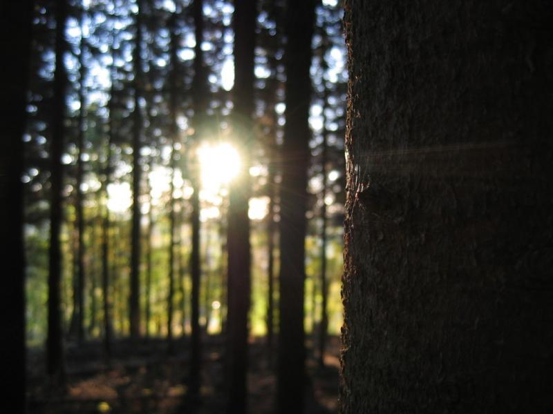 mehrere Bäume und ein Ball aus Gas o_O
