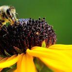 meilenweit für honig