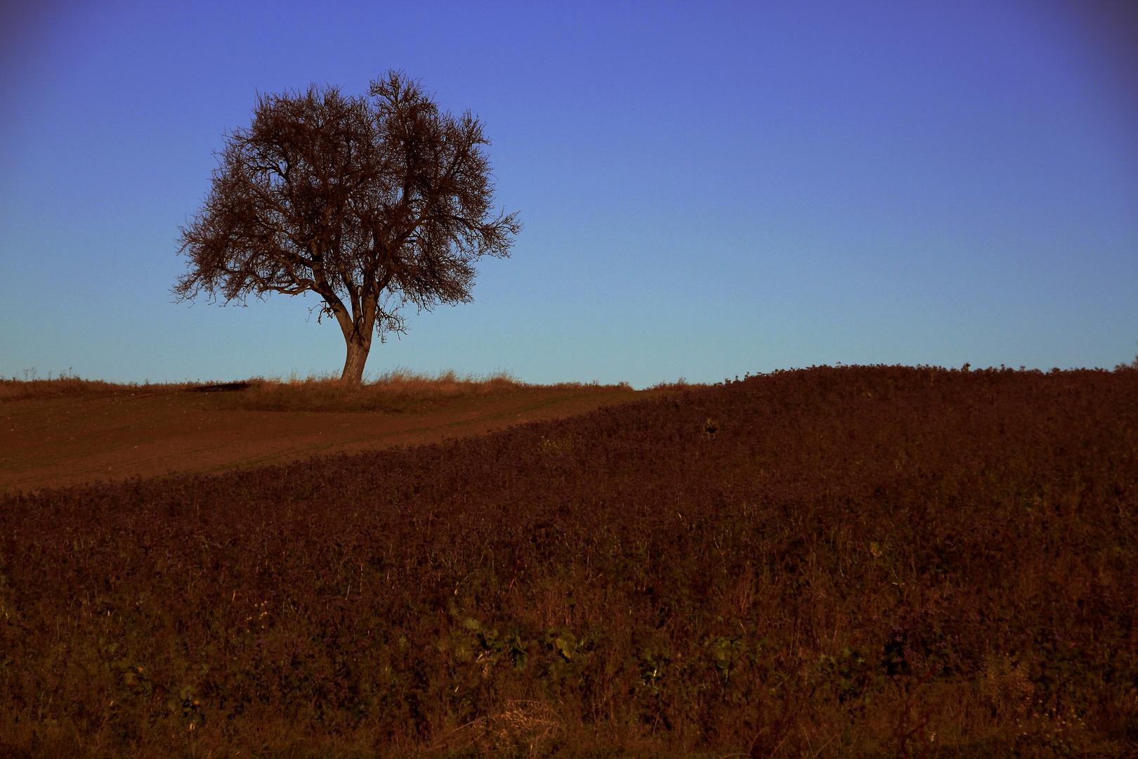 Mein Adventsbaum