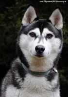 Mein anderes Hundemädchen =)