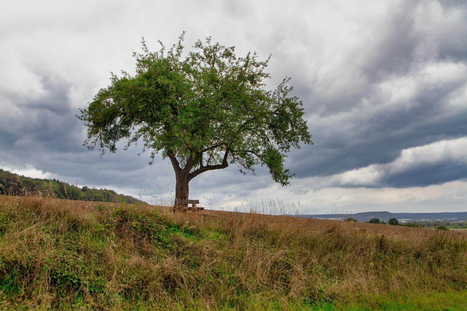 Mein Apfelbaum im September