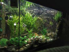 Mein Aquarium in HDR