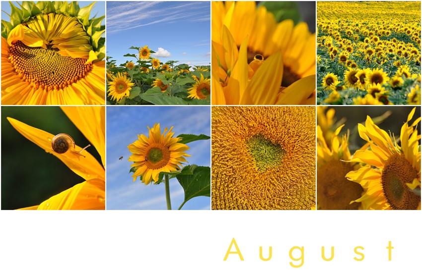 Mein August ist gelb
