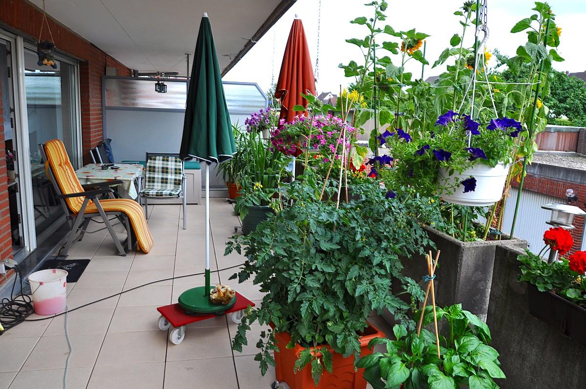 mein balkongarten (1) foto & bild | jahreszeiten, sommer, dies und