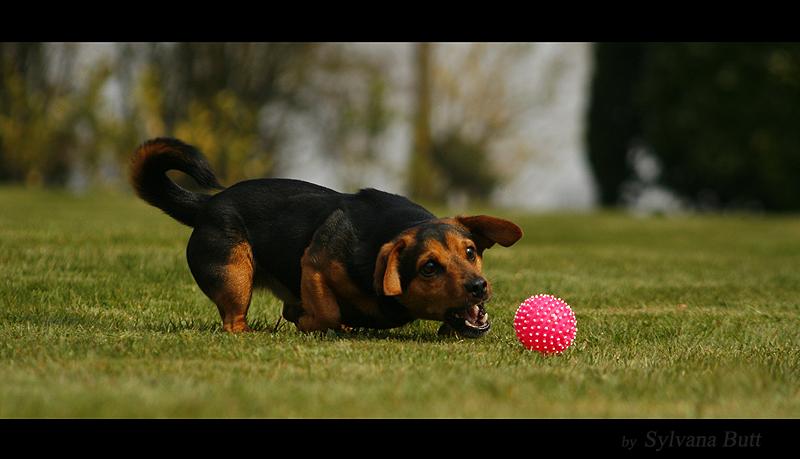 - Mein Ball! -