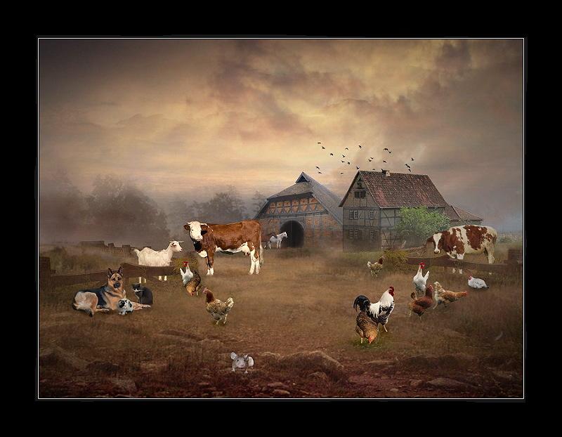 Mein Bauernhof