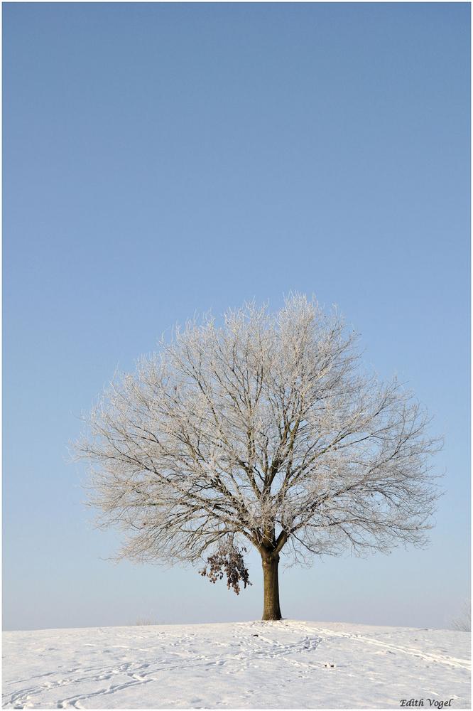 mein Baum.....