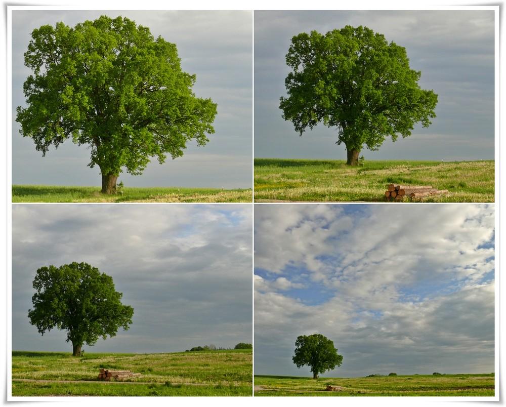 """""""Mein Baum"""""""