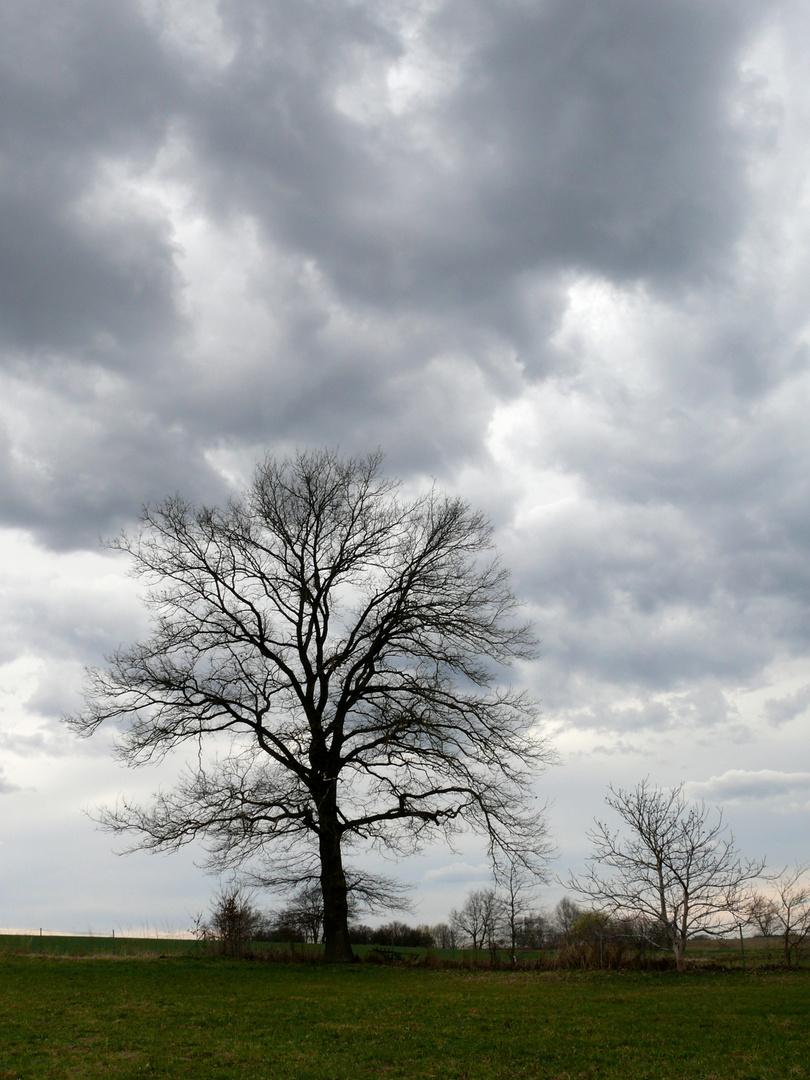 """""""Mein"""" Baum..."""