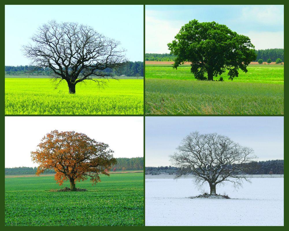 """""""mein"""" Baum"""