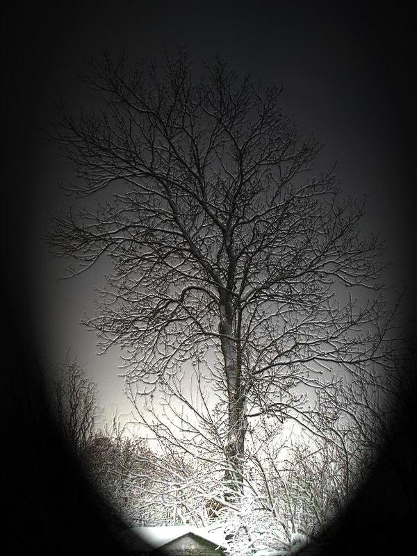 mein Baum