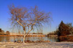 Mein Baum....