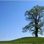 Mein Baum im Frühling