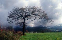 Mein Baum im Herbst