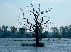 """°°° """"Mein"""" Baum - im Herbst - und Wasser °°°"""