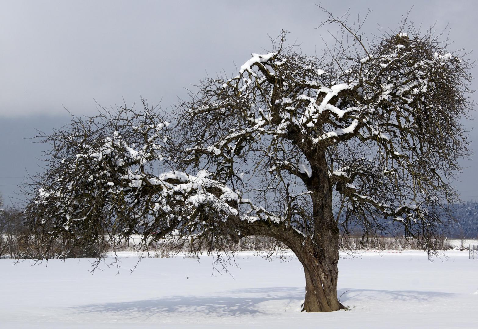 mein Baum ohne Sonnenschein