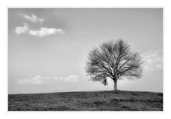 mein Baum s/w.....