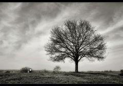 mein Baum...s/w