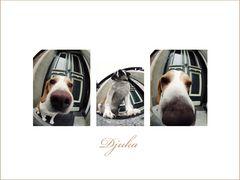 Mein Beaglewegbegleiter gefisheyed :)