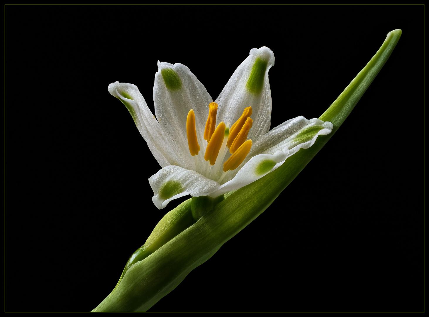 Mein Blumen-Gruß zum Osterfest