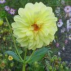 Mein Blumenbild