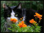 Mein Blumenfreund