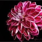 Mein Blumengruß ...
