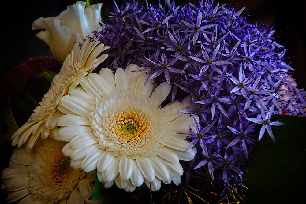 Mein Blumengruß an Euch