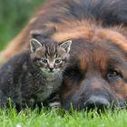 Mein Bodyguard!