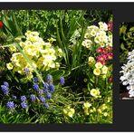 Mein bunter Frühlinggsgarten - 8