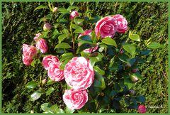 Mein bunter Frühlingsgarten - 5
