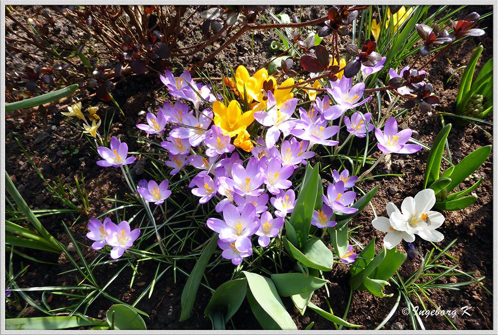 Mein bunter Garten im Frühling