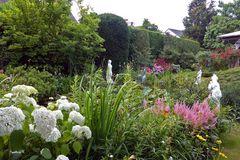 mein bunter Garten im Juli nach dem Regen