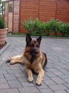 Mein Doggy