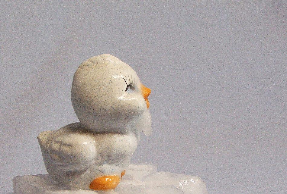 Mein erster Eisvogel!