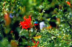 Mein erster Kolibri