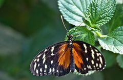 Mein erster Schmetterling!!!!