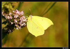 Mein erster Schmetterling..