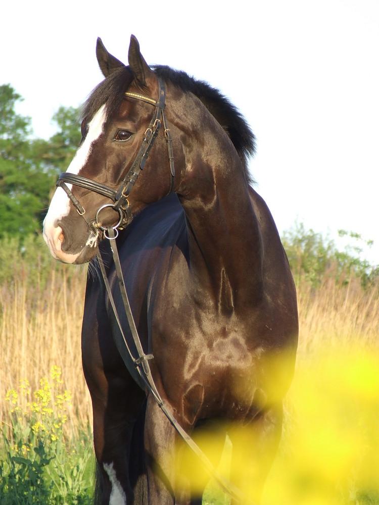 Mein erster Versuch einer Pferdefotographie