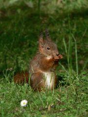Mein erstes Bild / Eichhörnchen