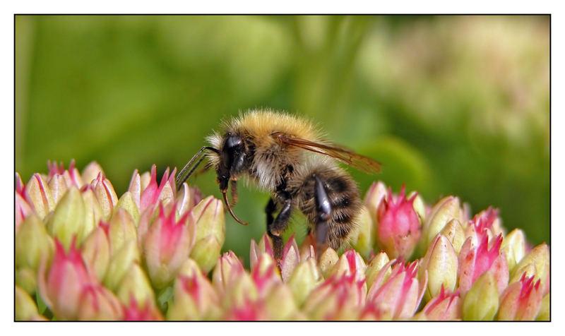 Mein erstes Insektenbild.....