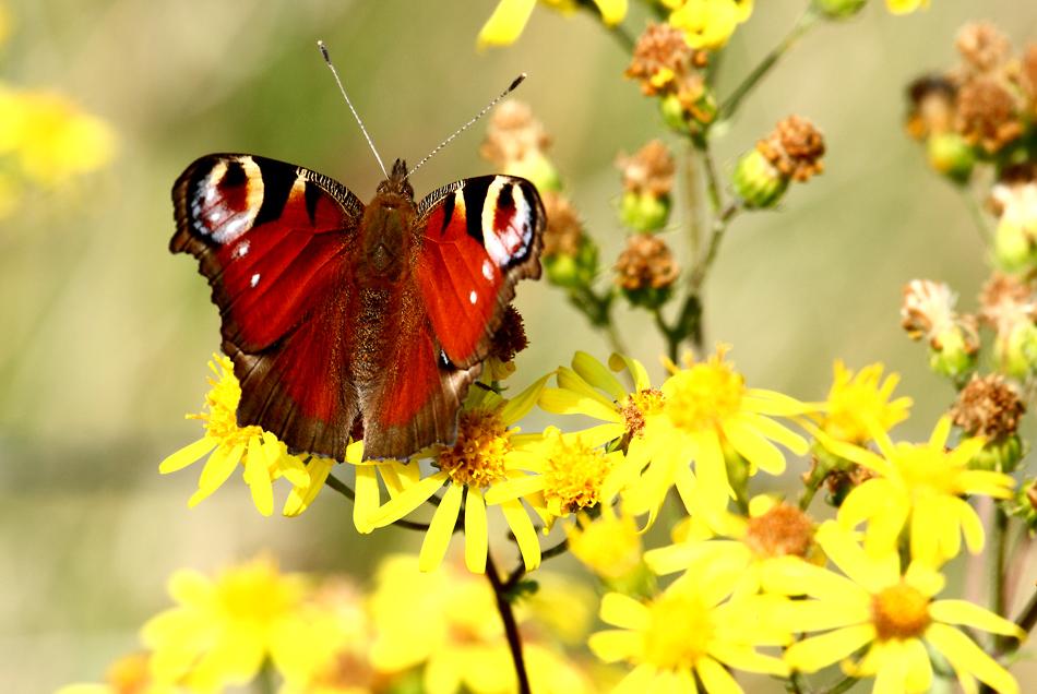 Mein erstes Schmetterlingsfoto
