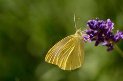 Mein erstes Schmetterlingsmakro