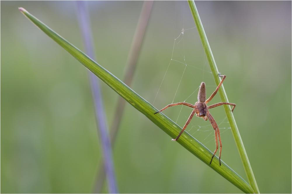 Mein erstes Spinnenmacro