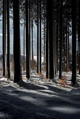 mein erstes winterbild.....