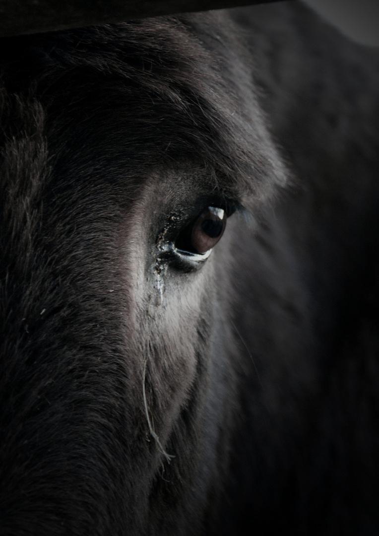 mein Esel