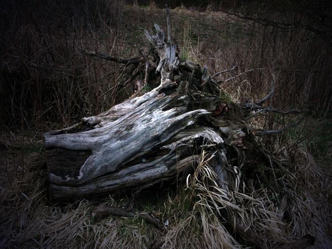 Mein Ex-Freund, der Baum