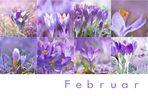 Mein Februar ist lila