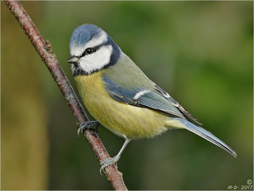 Mein Freund Birdy ...